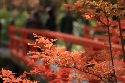 autumnal-leaves-1698035